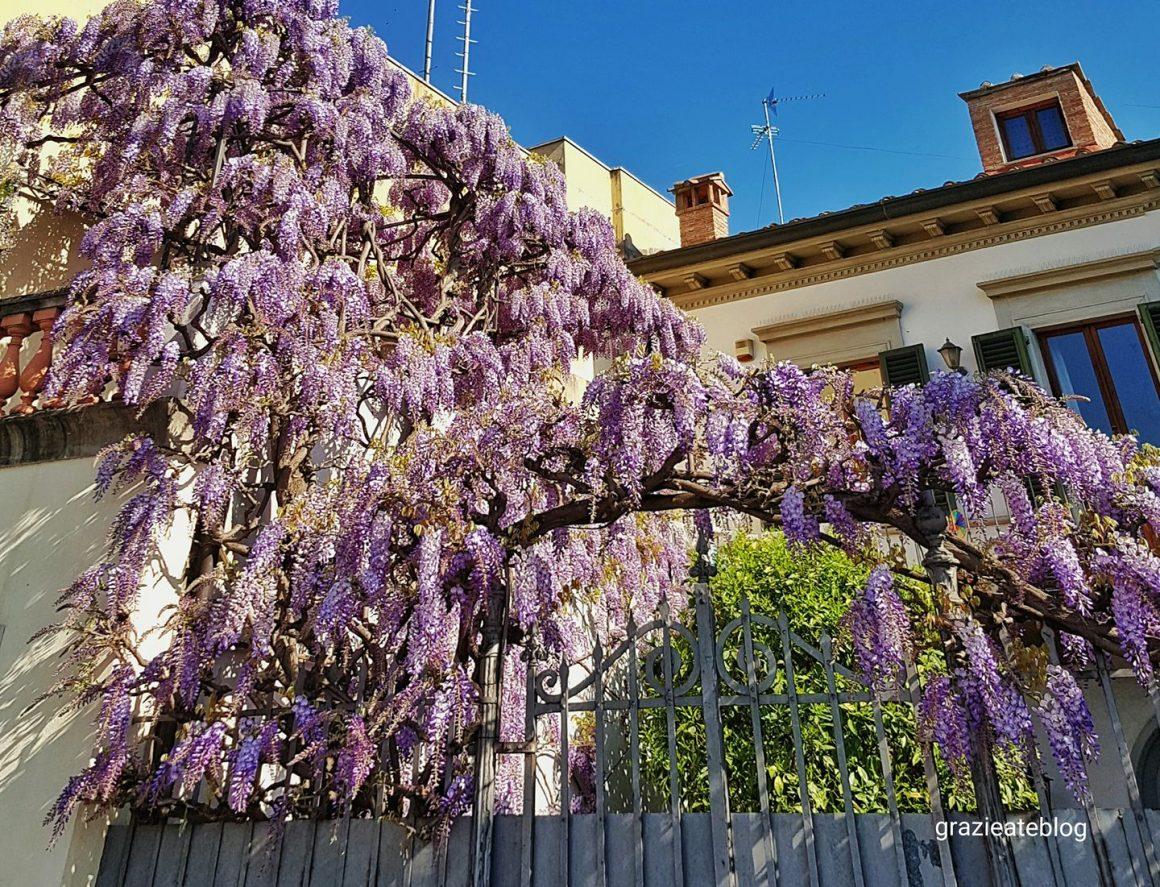 primavera-florença